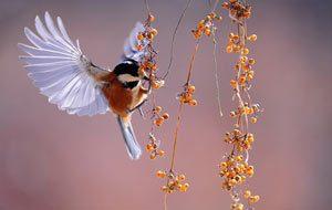 bird nest problem colorado