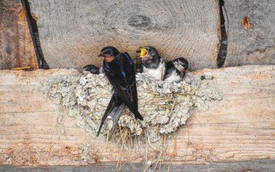 Bird Control in Southwest Colorado