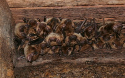 Bat Season