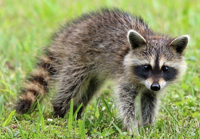Timely Wildlife Removal