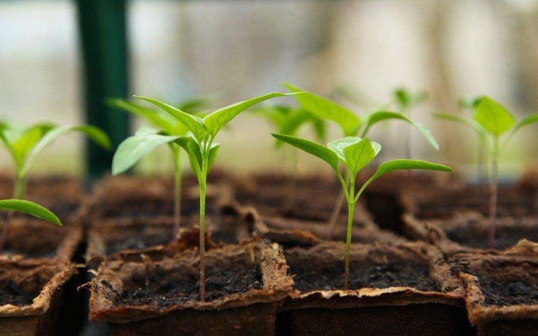 Gardening Tips to Discourage Nuisance Wildlife